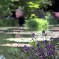 Giverny - jardin de Monet||<img src=./_datas/t/t/0/tt06vj1ymt/i/uploads/t/t/0/tt06vj1ymt/2011/06/04/20110604171737-0a162128-th.jpg>